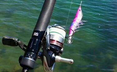 【伊豆2021春】デカアオリイカ狙いエギング攻略 タックル&釣行アイテム