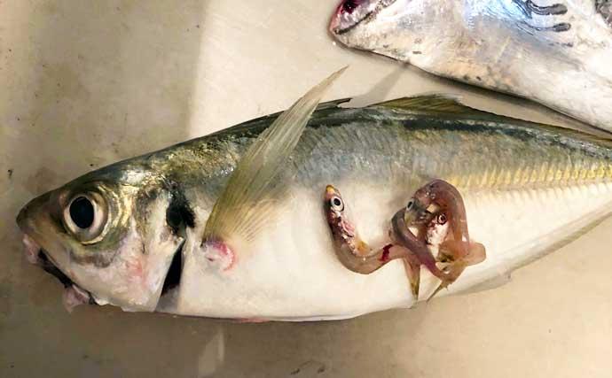 『アジング』2大パターン:「プランクトン」&「ベイトフィッシュ」