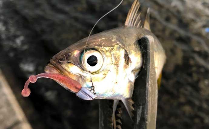 『アジング』ステップアップ解説:釣果が伸びる「絶好の条件」とは?