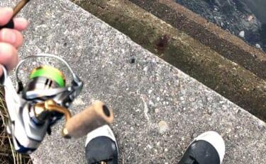 今さら聞けない陸っぱりライトゲームのキホン:釣行時の靴って何履く?