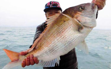 【響灘】沖釣り最新釣果 タイラバで良型マダイに泳がせでハタ類乱舞