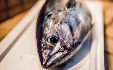 静岡で『近海カツオ』が水揚げ 「初物」だけど「初鰹」ではない?
