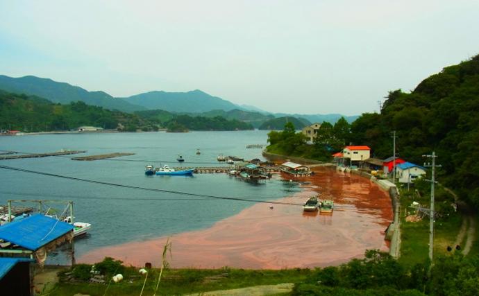 鹿児島で「赤潮警報」が発令 暑い時期ではなく冬に発生したワケとは?