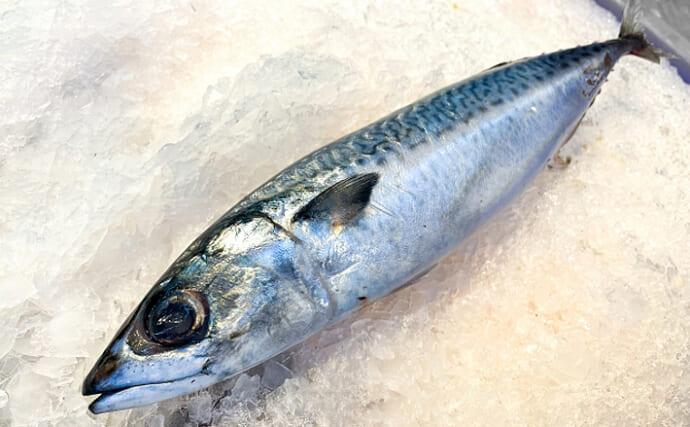 4月1日は『エイプリルフール』 フランスでは「4月の魚」の日?