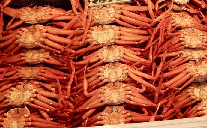 『ベニズワイガニ』の水揚げがピーク 近年ではブランド化進み人気者に