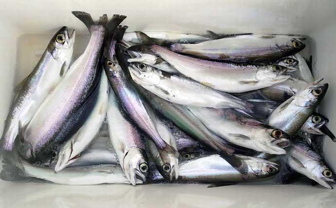 西湖でまもなく解禁 最も美味な淡水魚と評判の『ヒメマス』釣りとは?