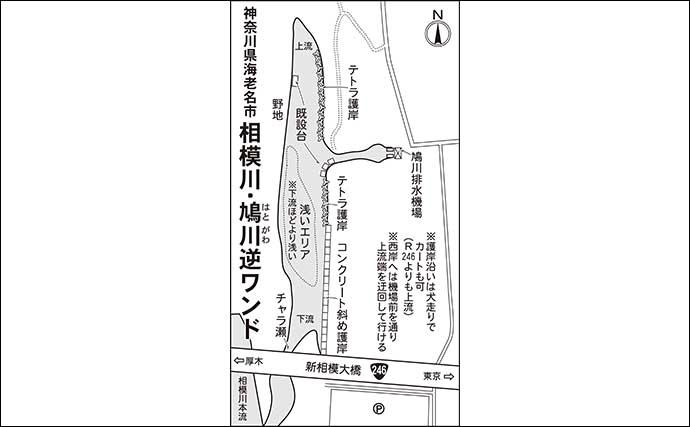 今週のヘラブナ推薦釣り場【神奈川県・鳩川逆ワンド】
