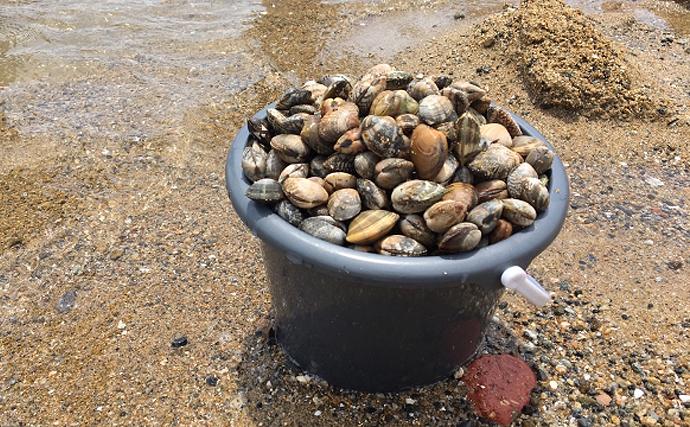潮干狩りシーズン到来 アサリの天敵だけど美味な「ツメタガイ」とは?