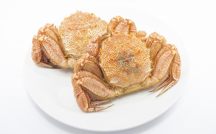 三陸の毛ガニが不漁続きでも売上拡大のワケ 「漁業資源管理」がキモ
