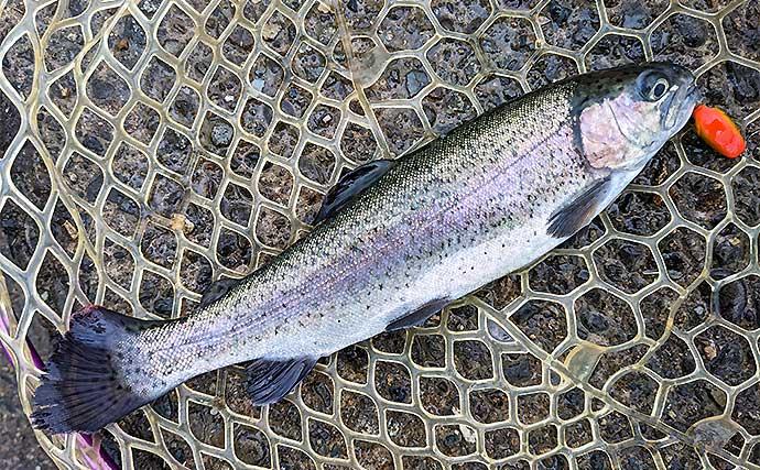 管理釣り場でニジマス20匹 雨天だからこその釣果?【北方川釣り体験場】