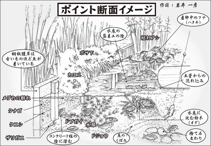 【2021春】乗っ込みマブナ釣り徹底解説 「ホソ」で気軽に楽しもう