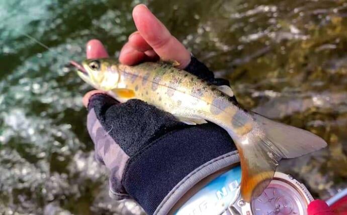 渓流釣りで「黄金ヤマメ」含め20尾 ミミズエサで手中【島根・紙祖川】