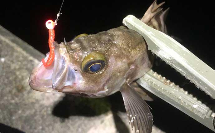 ここから覚えたい『陸っぱりライトゲーム』用語集:釣行アイテム関連