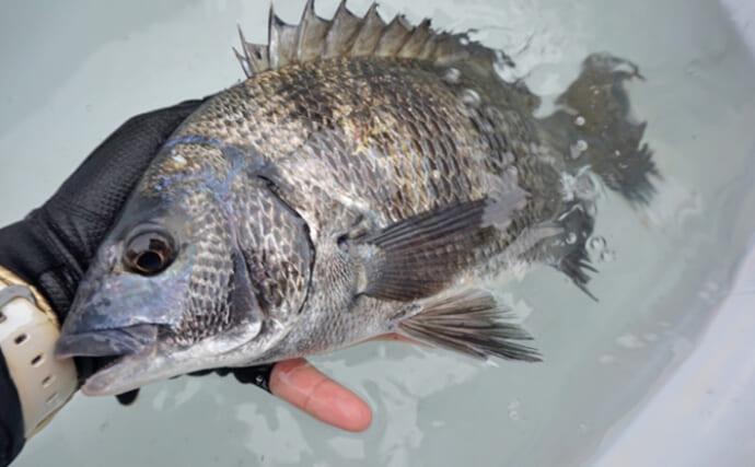 クロダイを「コーン」や「スイカ」のエサで釣るための条件とは?