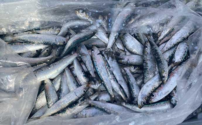 【東海2021】春のサビキ釣り攻略 釣果を伸ばす3つのポイントとは?