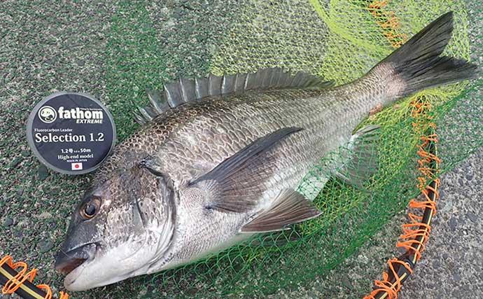フカセクロダイ釣りで乗っ込み期待も想定外の釣果に【静岡・清水港】