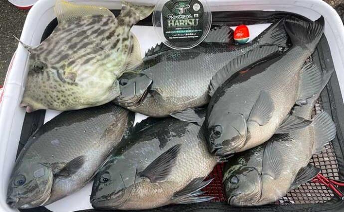 グレフカセ釣りで数釣り満喫 ハリスで沈下速度調整が奏功【三重】