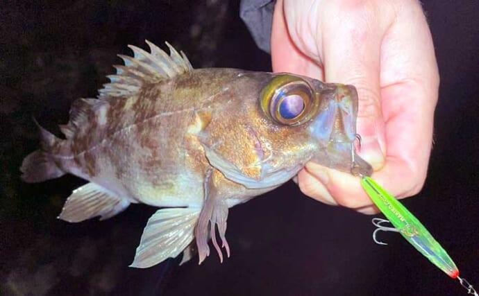 『メバリング』ステップアップ解説:ウェーディングでの釣り方と注意点