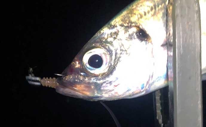 『ライトゲーム』ステップアップ解説:魚種別ショートバイト傾向と対策