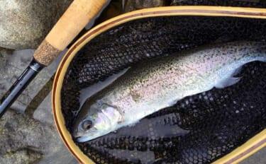「古式テンカラ」釣りキャスティング精度を『馬素』&『ナイロン』で比較