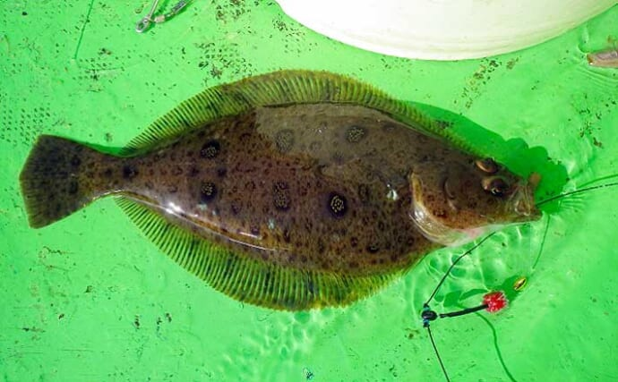常磐『小突きカレイ』釣りで本命21匹 好ゲストにマダコ【つれたか丸】