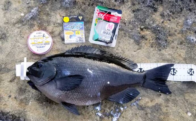 人気エリアの地磯フカセ釣りで45cm1.6kg口太メジナ【神奈川・城ケ島】