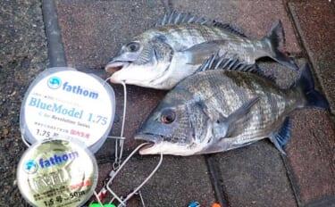 フカセクロダイ釣りの「コマセ」配合術:高水温~秋の荒食いシーズン
