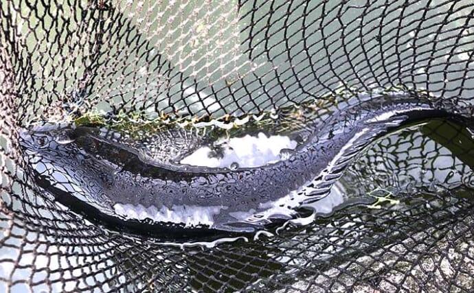 コイ釣り堀へ手ぶら釣行 「的確すぎる」常連のアドバイスで連発ヒット