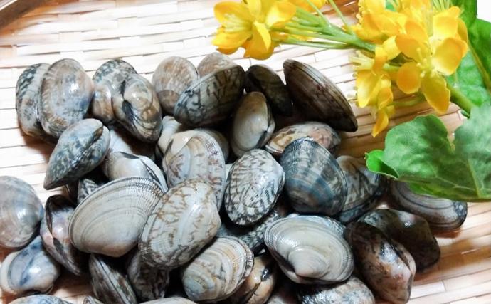浜名湖の潮干狩りが3年連続中止に アサリが減ったのは乱獲が原因?