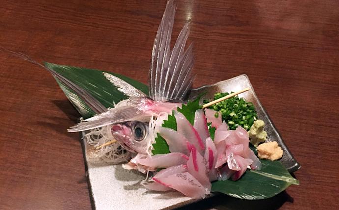 空飛ぶ魚トビウオの一種「角トビ」は春が旬 東日本では知名度低め?