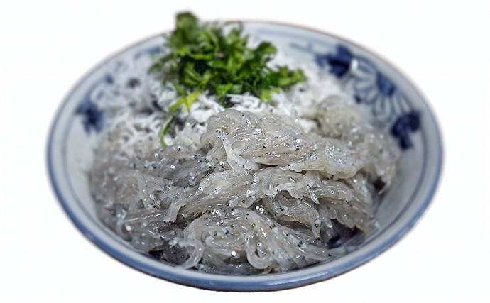 駿河湾のシラス漁が解禁 出口の見えない「不漁」の原因は黒潮大蛇行?