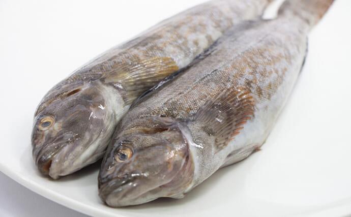 魚介で地域活性化:青森県階上町でブランド化目指す「アブラメ」とは?