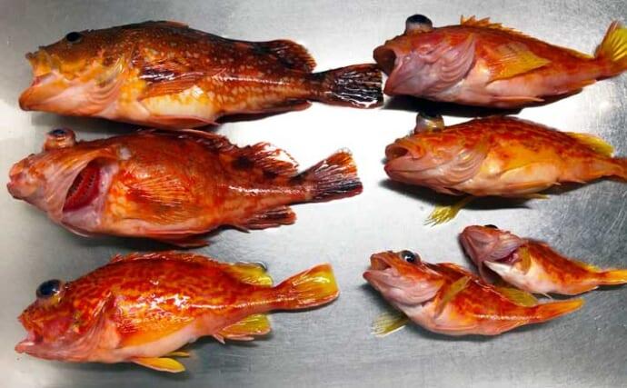 泳がせ釣りでカサゴ族7匹 エサ狙いのサビキも楽しい【三重・魚勘丸】