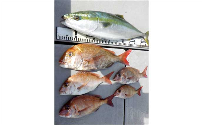 【愛知】沖のエサ釣り最新釣果 春の『ウタセ五目』開幕で魚種多彩