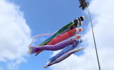 『こいのぼり』のカラーリングの由来 1964年の「東京五輪」が関係?