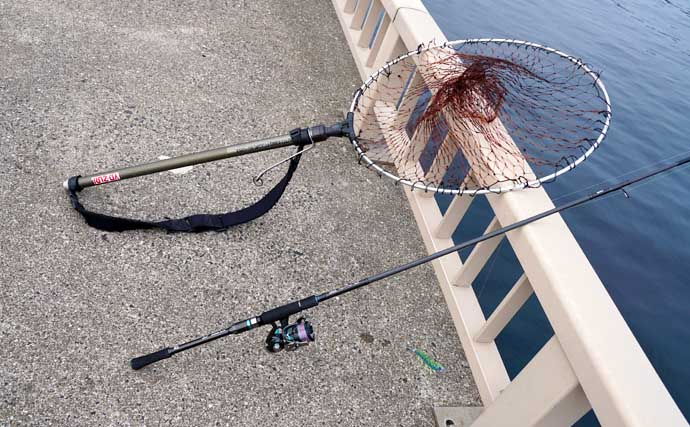 【九州2021】春アオリイカエギング入門 ポイント選定&基本の釣り方