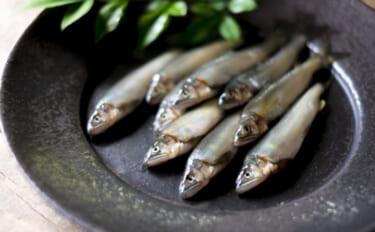 鹿児島で稚アユ狙う『エゴ漁』実施 食味も価格も生魚に負けず劣らず?