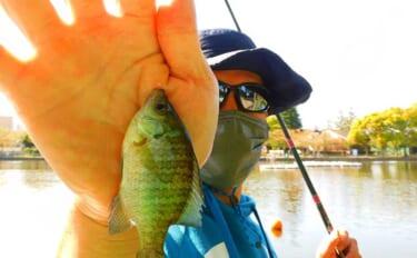 気軽に楽しめる「ブルーギル」の数釣りがオモシロイ【東京・浮間公園】