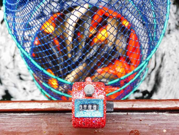 昭和レトロな釣り堀でキンギョ&コイ200尾超え【常盤つり堀センター】
