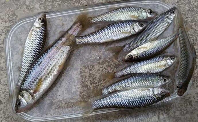 さぎ山記念公園でモツゴ(クチボソ)釣り満喫 子連れ釣行にもオススメ