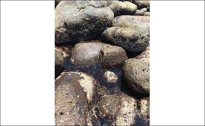 ゴロタ浜で楽しむムラソイゲーム ランガン穴釣りでアタリ連発【伊豆】