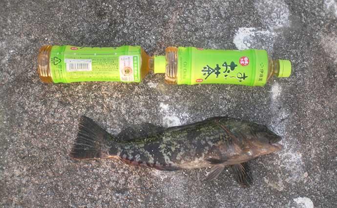 波止釣り『エサ図鑑』:シラサエビ 釣れる魚・入手方法・使い方
