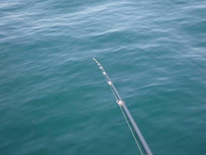 フカセクロダイ釣りの「コマセ」配合術:冬の低水温期