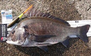 沖磯でのフカセチヌ釣りで48cm頭8匹 乗っ込みに好期待【和歌山・田辺】