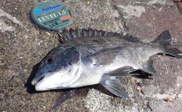 堤防フカセ釣りで気難しい産卵期のクロダイに挑戦【静岡・清水港】