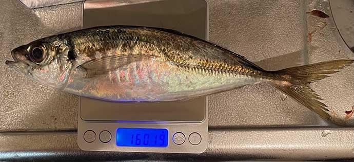 今さら聞けないライトゲームのキホン:魚の「重さ」とライン強度の関係