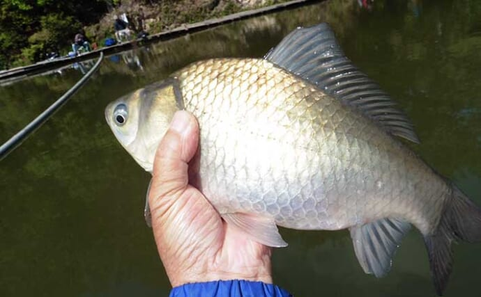 管理釣り場でヘラブナ釣り満喫 水ぬるみ尺上ばかりが好調【FC竹の内】