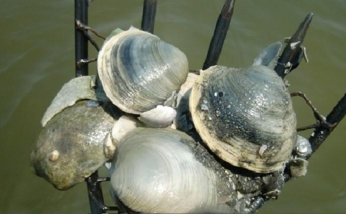 知っていそうで実は知らない貝の下処理方法 潮干狩り前に要チェック