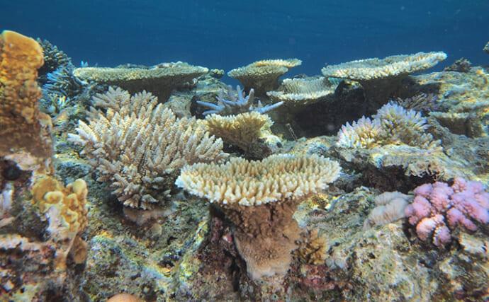 香港で「サンゴ」保全に『3Dプリンター』が活躍 生存率が大幅アップ?