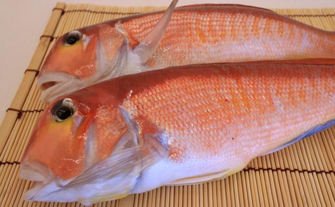 高級魚アマダイの不思議 産地よりも「漁獲後の扱い」で価値が変動?